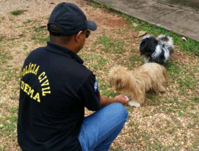 Polícia apreende 2 cães de estudante que estupro de cadela em Cuiabá, MT