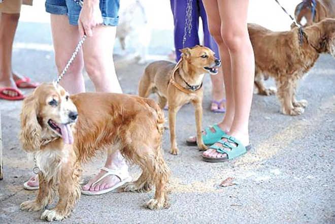 Lei torna obrigatório chip em cães e gatos na cidade de Rondonópolis, MT