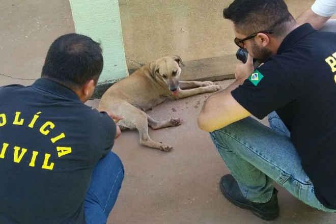 Cadela que aparece em vídeo de zoofilia é resgatada pela Dema