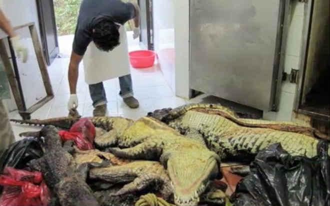 Zoológico mexicano de Chiapas é acusado de sumiço de animais