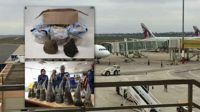 """Aeroporto internacional de Maputo é """"hub"""" do tráfico de cornos de rinoceronte para Ásia"""