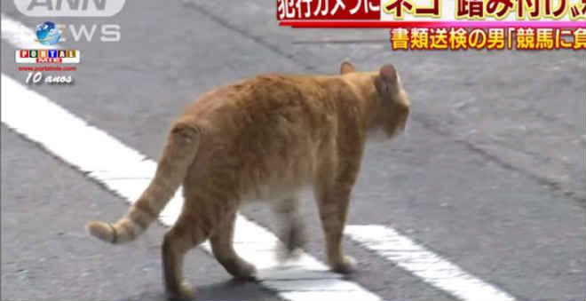Homem é preso por pisar e matar gatos em Nagoia, no Japão