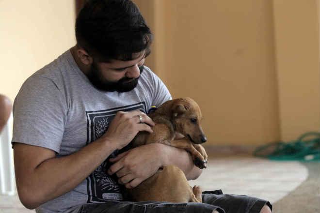 Câmara define agenda mínima em defesa da causa animal em Belém, PA