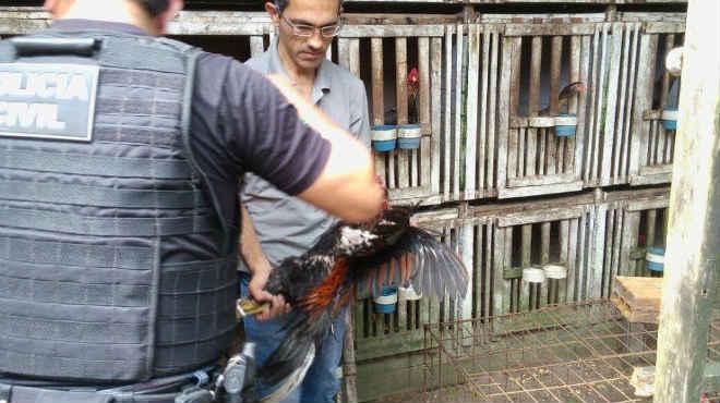 Homem é preso por maus-tratos a animais em Belém, PA