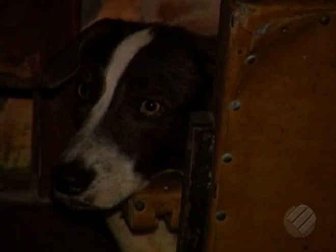Família se muda e abandona cão trancado em casa, em Belém, PA