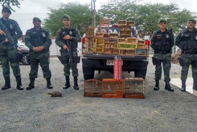 Mais de 100 aves são resgatadas em feira de Campina Grande (PB) pela PM