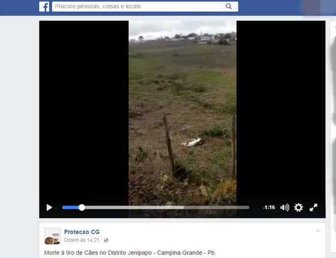 Polícia investiga assassinato de cachorros em Campina Grande, PB