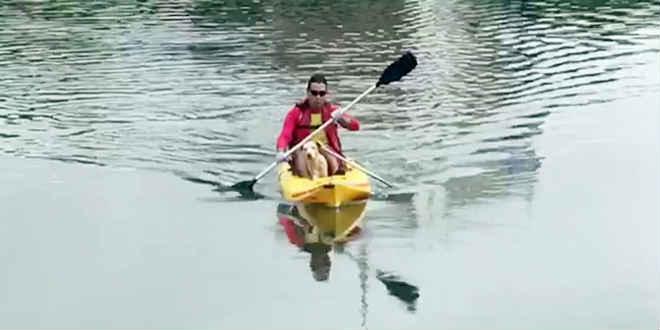 Cadela fica 'ilhada' em fonte da lagoa em João Pessoa (PB) e é resgatada por bombeiros