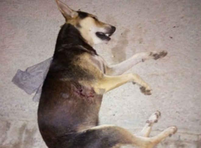 Policia procura homem que matou cachorro a tiro, com espingarda de pressão no Mutirão, em Patos, PB