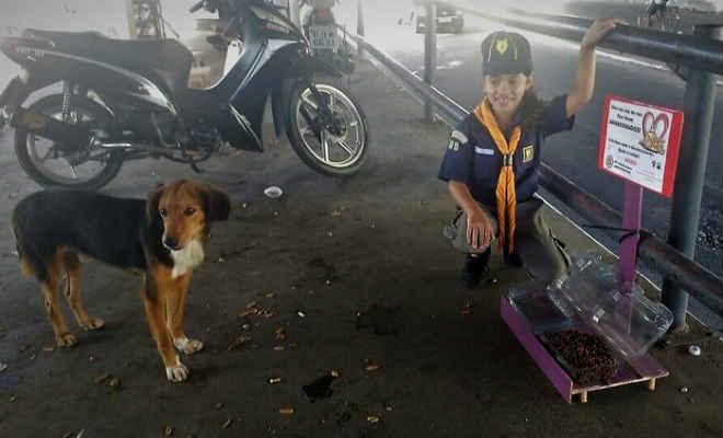 Menina de 7 anos constrói reservatório para alimentar animais abandonados em Jaboatão dos Guararapes, PE