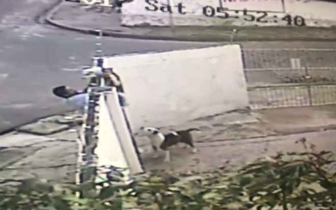 Tutora denuncia sequestro de filhote de pitbull de dentro de empresa no Recife, PE