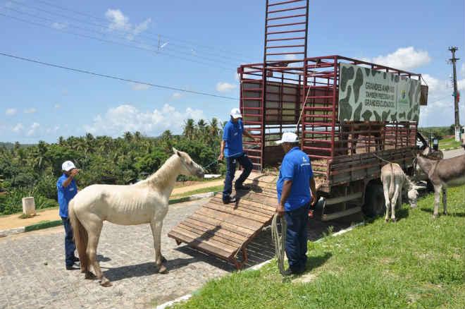Prefeitura de Igarassu, no Grande Recife, vai apreender animais de grande porte que estiverem em ruas