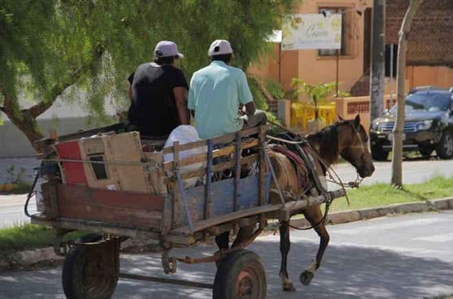Projeto de vereadora quer acabar uso de jumentos em carroças em Teresina, PI