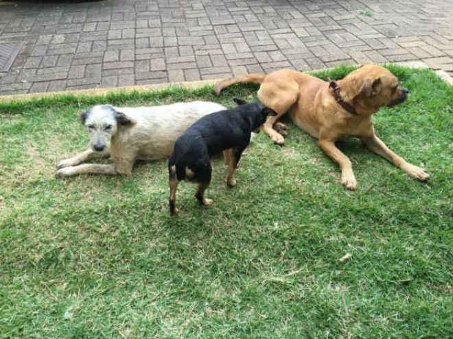 Cachorros são envenenados com chumbinho em Cascavel, PR