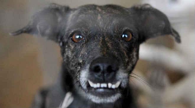 Feira de adoção e microchipagem de cães neste fim de semana no Parque Barigui, em Curitiba, PR
