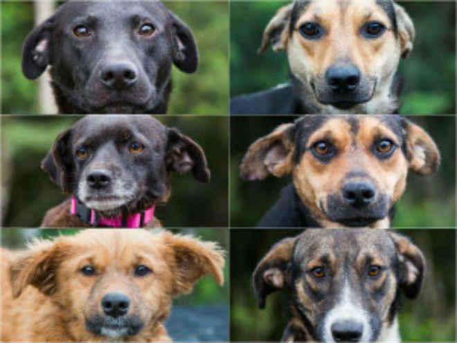 Feira pretende encontrar novos lares para cães resgatados na Região Metropolitana de Curitiba, PR