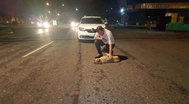 Homem tenta socorrer cão atropelado, mas ele não resiste