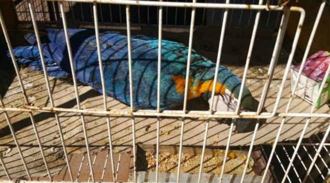 Polícia Ambiental apreende animais silvestres vítimas de maus-tratos em Londrina, PR