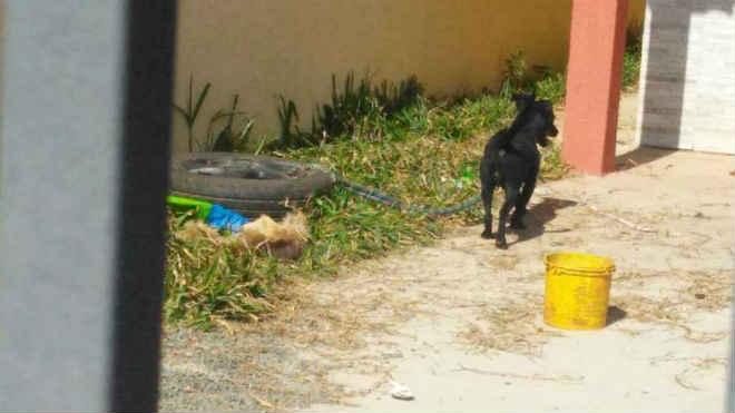 Guarda Municipal resgata animais vítimas de maus-tratos em Ponta Grossa, PR