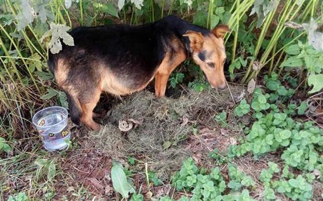 Número de cães envenenados chega a 26 e gera protesto em Ponta Grossa, PR