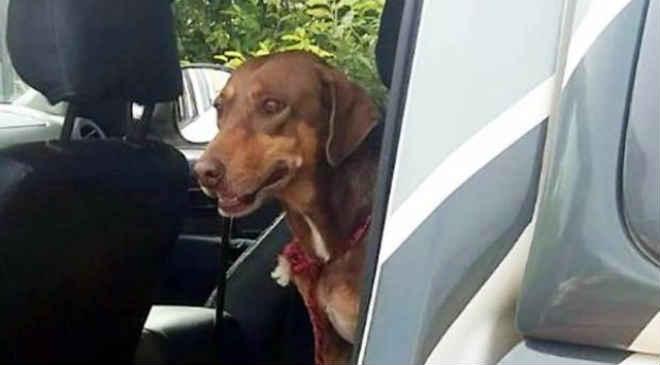 Cadela presa há oito dias é resgatada em casa abandonada em Umuarama, PR