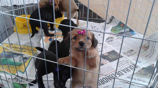 Shopping de Londrina recebe Feira de Adoção de Cães e Gatos neste domingo