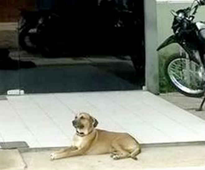 Cachorrinho espera pelo tutor, que foi preso, na frente de delegacia do Piauí