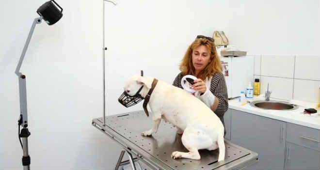 Portugal: Centro de Bem Estar Animal de Albufeira acolhe Serviço Municipal de Veterinária