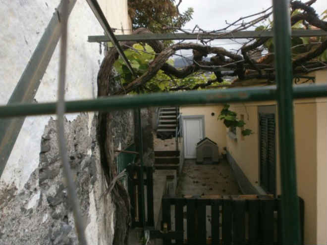 GNR chamada a caso de negligência animal em Funchal, Portugal