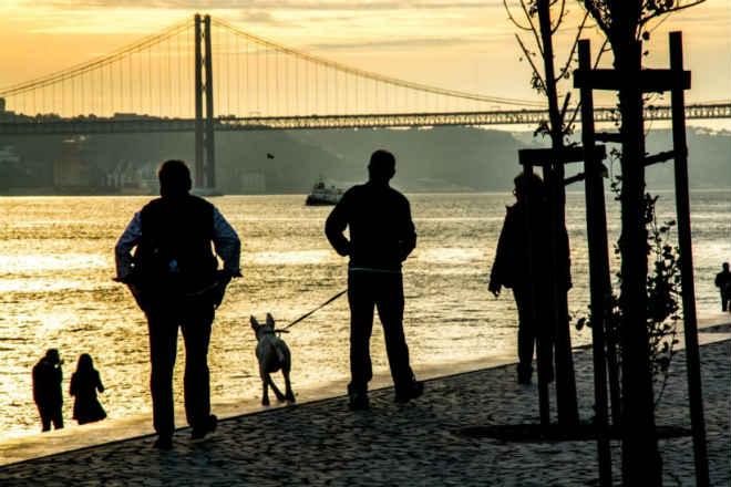 Portugal: Provedora dos animais de Lisboa demite-se por falta de condições
