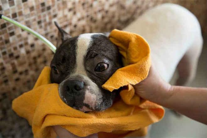 Portugal: Lisboa vai passar a ter Provedor Municipal dos Animais a tempo inteiro