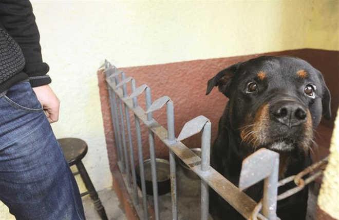 Petição contra abate de cão que atacou criança com oito mil assinaturas