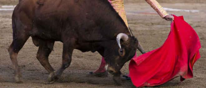Portugal: Câmara proibiu tourada mas está a ser montada uma arena, denuncia Bloco