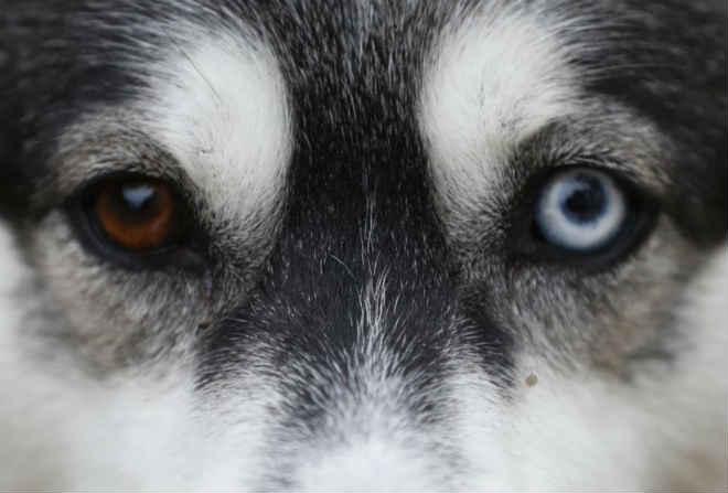 Homem é condenado por enterrar cadela viva em Portugal, mas pena é suspensa
