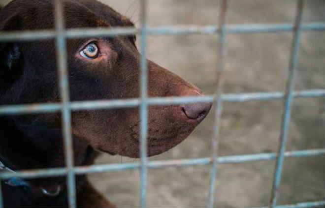Crimes contra animais 'de companhia' aumentam 22% em Portugal