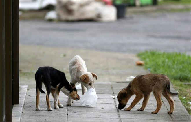 Mais de 5000 queixas por maus tratos a animais em 2016 em Portugal