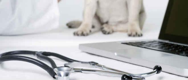 Portugal: Municípios pedem veterinários que cumpram lei que proíbe abate em canis