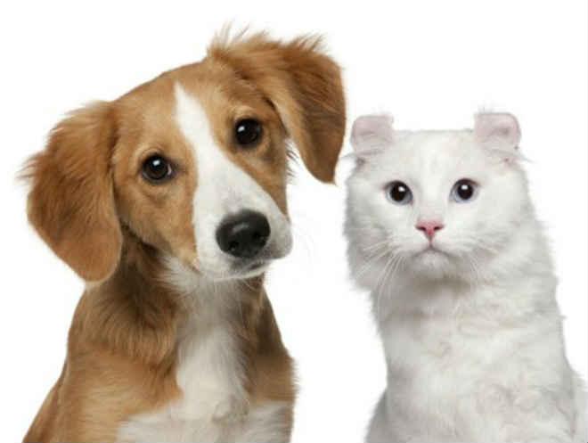 Ordem dos Veterinários quer criar cheque veterinário em parceria com as Câmaras de Portugal