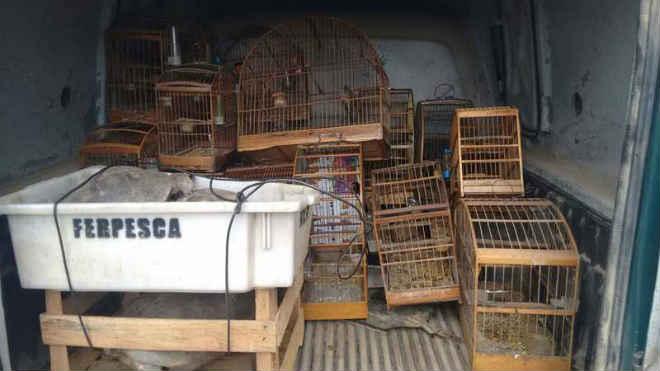 Polícia Ambiental resgata mais de 20 animais silvestres em Maricá, RJ