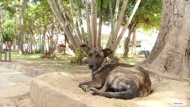 Número de cães abandonados aumenta em distrito de Valença, RJ