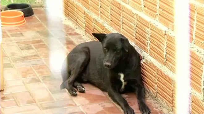 Número de cães abandonados cresce em Volta Redonda, RJ