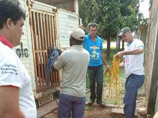 Captura de animais deve ser reiniciada em Ji-Paraná, RO