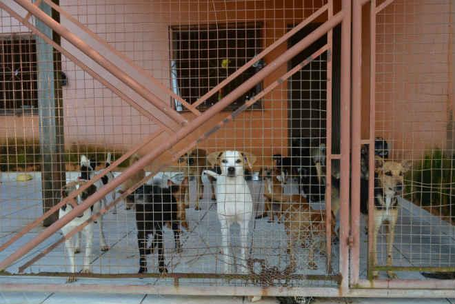 Associação que cuida de 180 cães e gatos pode fechar por falta de ajuda, em RO