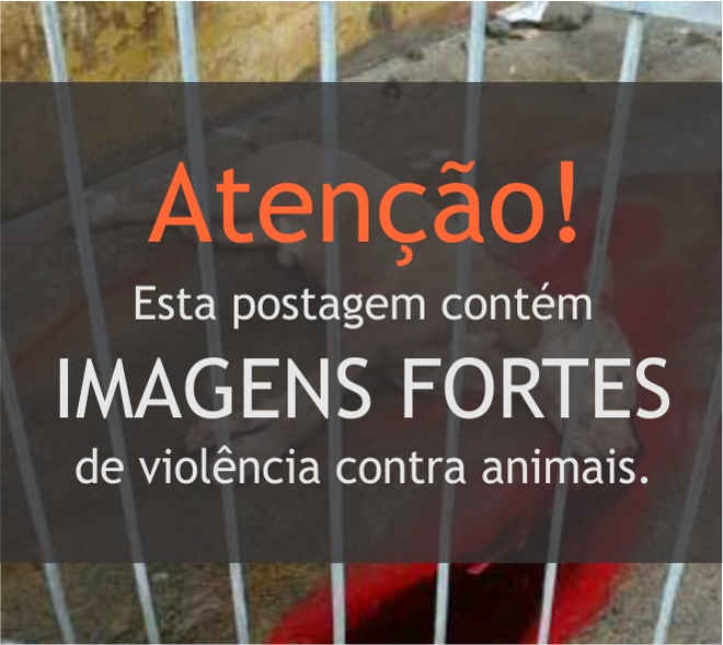 Homem mata cão pit bull a pauladas em Porto Velho, RO