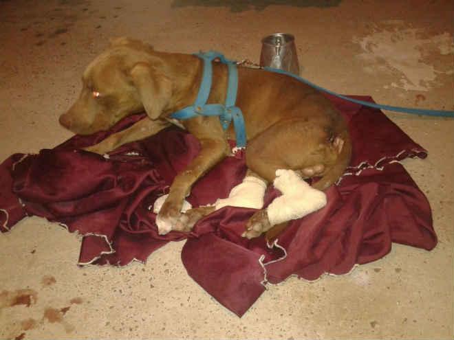 Cachorro tem patas cortadas por vizinho em RR; Polícia Civil investiga