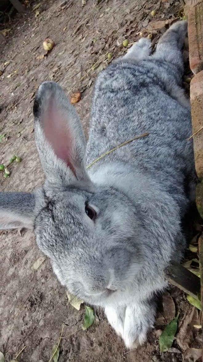 Núcleo de Proteção aos Animais de Bagé (RS) alerta para abandono de coelhos após a Páscoa