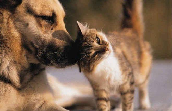 Conselho de proteção e defesa dos animais será discutido na próxima sessão da câmara de Camaquã, RS