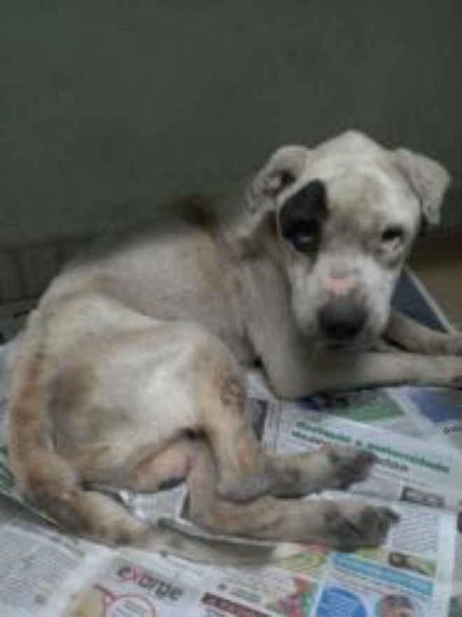 Bem-Estar Animal apreende quatro animais por maus-tratos em Canoas, RS