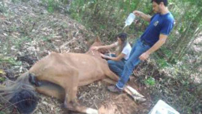 Fiscalização da ARPA flagra maus-tratos a animais no interior de Guaporé, RS