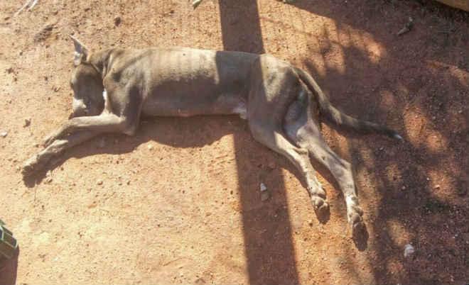 Cachorros morrem após suspeita de envenenamento no Bairro Lili em São Sepé, RS